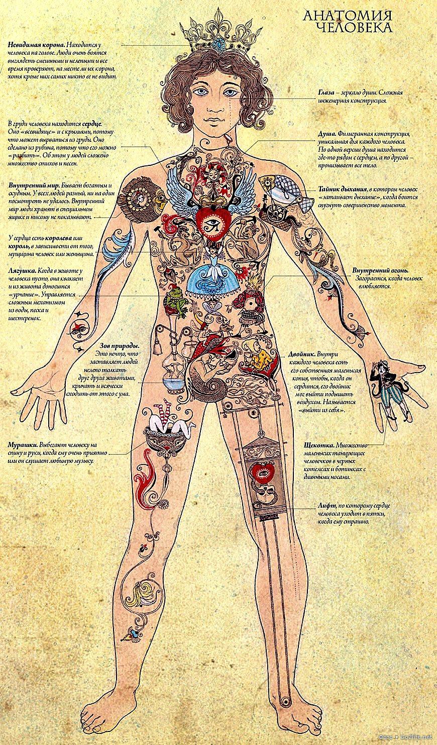 Уроки анатомии собственного тела в hd 7 фотография